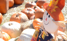 st louis pumpkin patches and hay rides