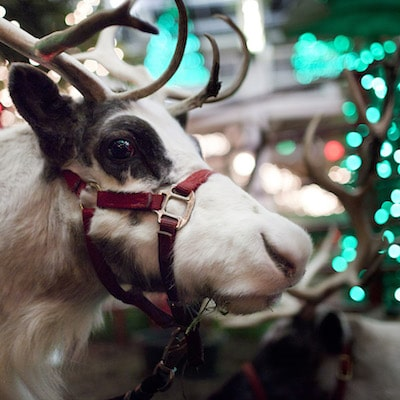 indianapolis zoo christmas lights